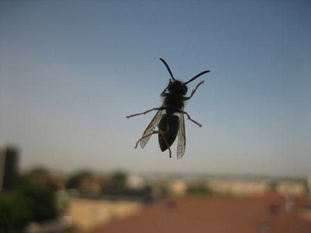 bee_on_window