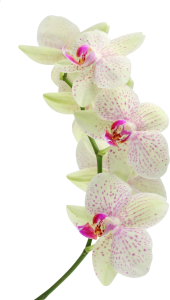 orchid_flower_white_branch_background_35167_2560x1600