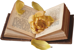 book_with_flower_inside_png__2_by_bettadenu-d9y7b4j