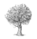 10-drawing-tree-completing-the-sketch.png